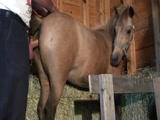 Cavalo Fazendo Seo Uma Egua